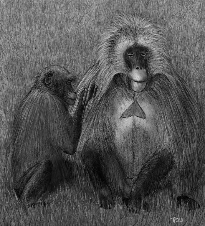 fig 1-3 gelada final revised